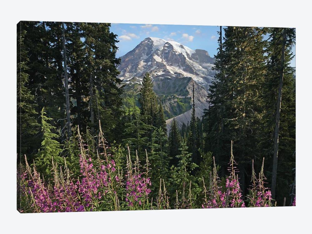 Fireweed Flowering And Mount Rainier, Mount Rainier National Park, Washington by Tim Fitzharris 1-piece Canvas Art Print