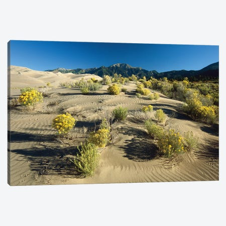 Flowering Shrubs On The Dune Fields In Front Of The Sangre De Cristo Mountains, Great Sand Dunes National Monument, Colorado Canvas Print #TFI370} by Tim Fitzharris Canvas Wall Art