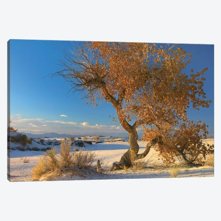 Fremont Cottonwood Tree Single Tree In Desert, White Sands National Monument, Chihuahuan Desert New Mexico Canvas Print #TFI377} by Tim Fitzharris Canvas Print