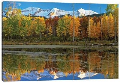Full Moon Over East Beckwith Mountain Rising Above Fall Colored Aspen Forests, Colorado Canvas Art Print