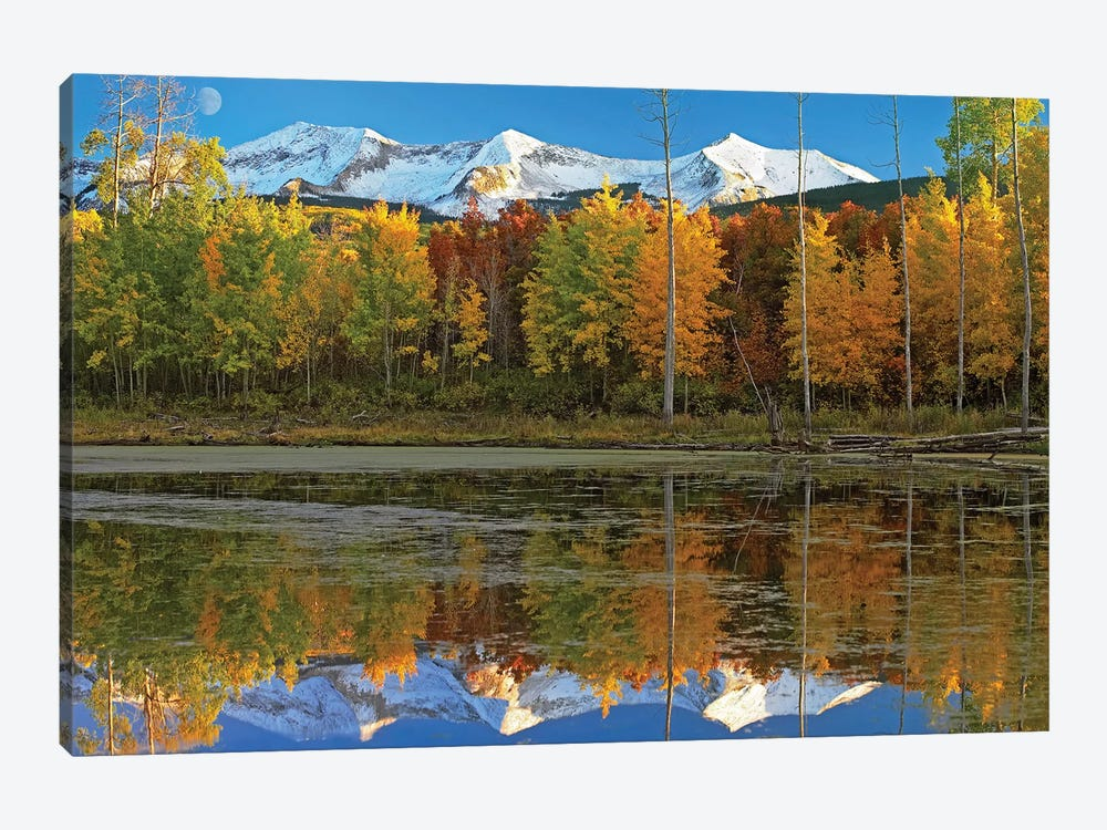 Full Moon Over East Beckwith Mountain Rising Above Fall Colored Aspen Forests, Colorado by Tim Fitzharris 1-piece Canvas Print