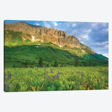 Gothic Mountain Overlooking Meadow Near Crested Butte, Colorado Canvas Print #TFI398} by Tim Fitzharris Canvas Artwork