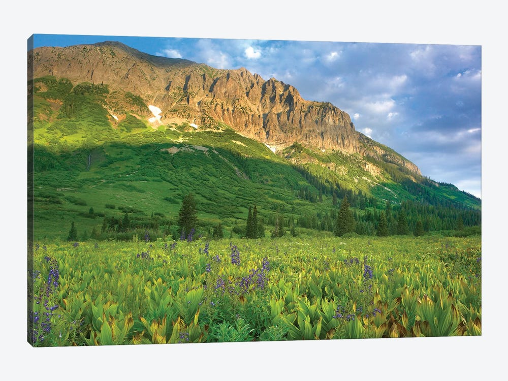 Gothic Mountain Overlooking Meadow Near Crested Butte, Colorado by Tim Fitzharris 1-piece Canvas Print