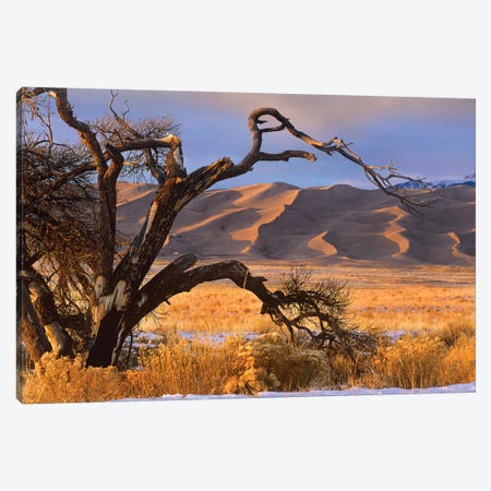 Grasslands And Dunes, Great Sand Dunes National Monument, Colorado Canvas Print #TFI409} by Tim Fitzharris Canvas Art