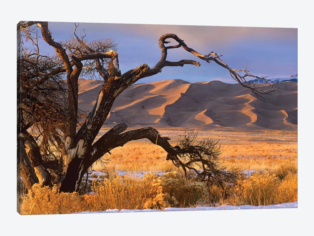 Grasslands And Dunes, Great Sand Dunes National Monument, Colorado by Tim Fitzharris 1-piece Canvas Art