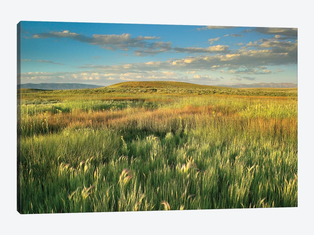 Grasslands, Arapaho National Wildlife Refuge, Colorado I by Tim Fitzharris 1-piece Canvas Artwork