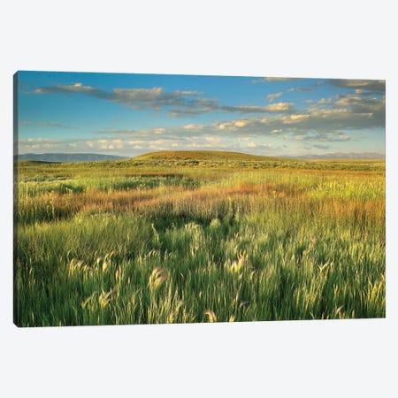 Grasslands, Arapaho National Wildlife Refuge, Colorado I Canvas Print #TFI410} by Tim Fitzharris Art Print