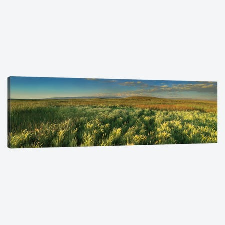 Grasslands, Arapaho National Wildlife Refuge, Colorado II Canvas Print #TFI411} by Tim Fitzharris Art Print