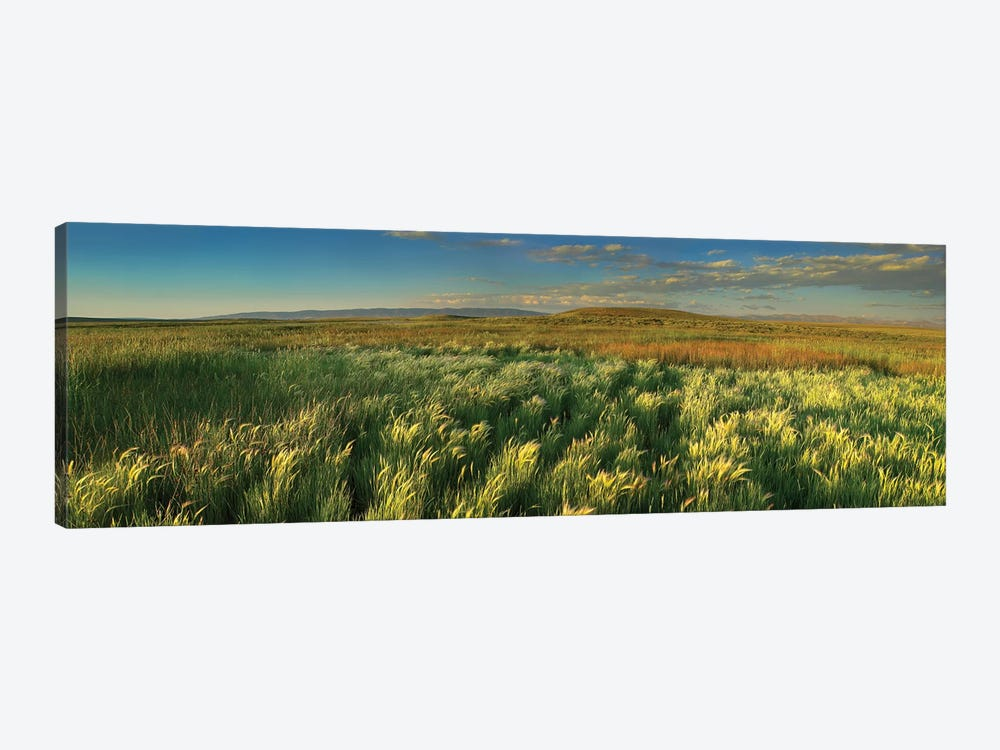 Grasslands, Arapaho National Wildlife Refuge, Colorado II by Tim Fitzharris 1-piece Canvas Art Print