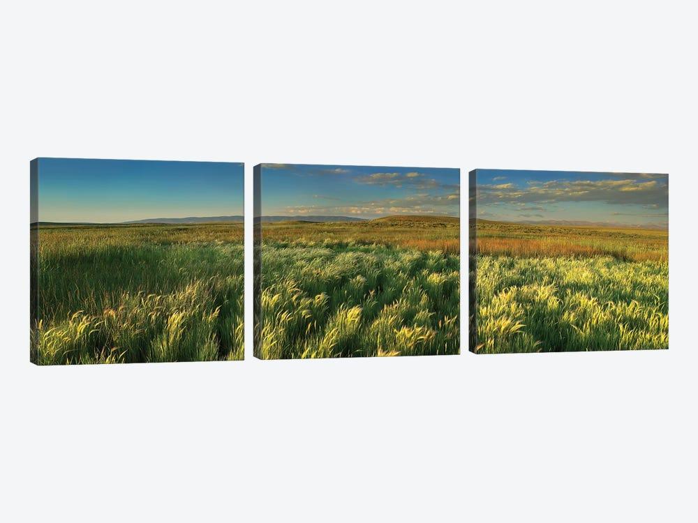 Grasslands, Arapaho National Wildlife Refuge, Colorado II by Tim Fitzharris 3-piece Art Print