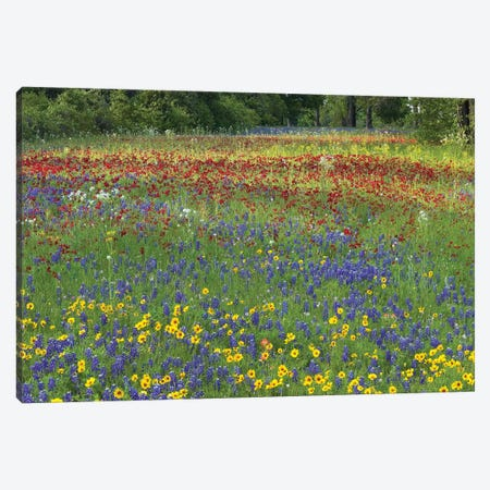 Annual Coreopsis Texas Bluebonnet, Fort Parker State Park, Texas And Drummond's Phlox Canvas Print #TFI41} by Tim Fitzharris Canvas Art