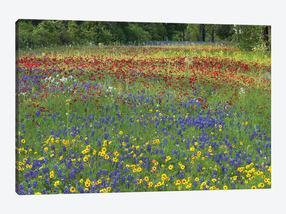 Annual Coreopsis Texas Bluebonnet, Fort Parker State Park, Texas And Drummond's Phlox by Tim Fitzharris 1-piece Art Print