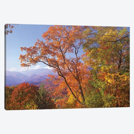 Great Smoky Mountains From, Blue Ridge Parkway, North Carolina Canvas Print #TFI428} by Tim Fitzharris Canvas Art