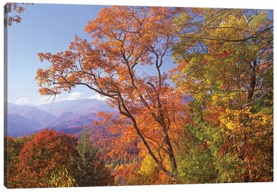 Great Smoky Mountains From, Blue Ridge Parkway, North Carolina Canvas Art Print