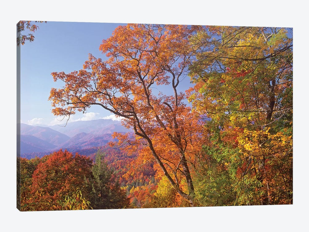 Great Smoky Mountains From, Blue Ridge Parkway, North Carolina by Tim Fitzharris 1-piece Canvas Art Print
