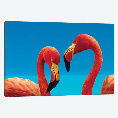 Greater Flamingo Courting Pair, Caribbean Species 3-Piece Canvas #TFI429} by Tim Fitzharris Canvas Wall Art