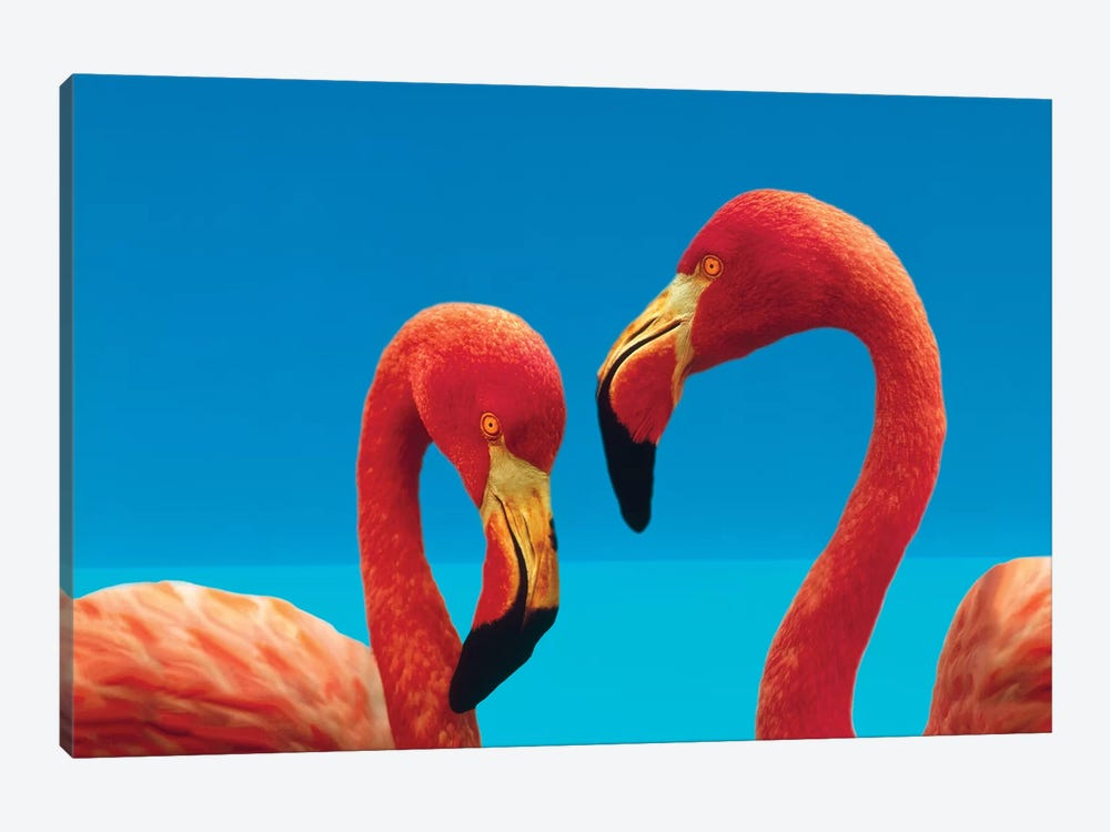 Greater Flamingo Courting Pair, Caribbean Species by Tim Fitzharris 1-piece Canvas Art