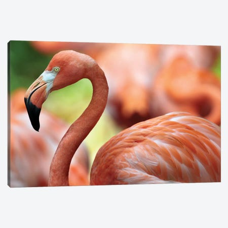 Greater Flamingo, Jurong Bird Park, Singapore 3-Piece Canvas #TFI431} by Tim Fitzharris Canvas Art Print