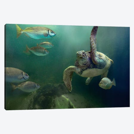 Green Sea Turtle And Fish, Sabah, Malaysia I Canvas Print #TFI435} by Tim Fitzharris Canvas Wall Art