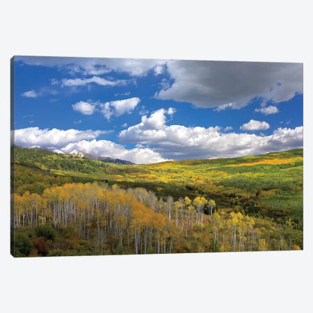 Gunnison National Forest In Fall, Colorado Canvas Print #TFI451} by Tim Fitzharris Canvas Art Print