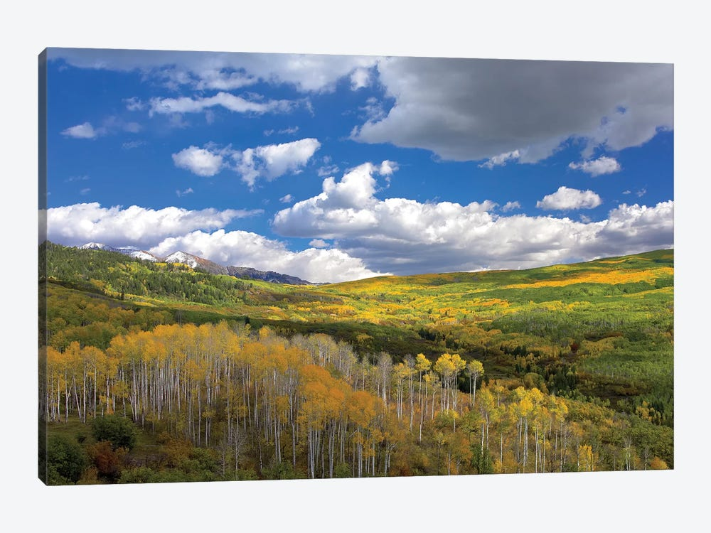 Gunnison National Forest In Fall, Colorado by Tim Fitzharris 1-piece Art Print