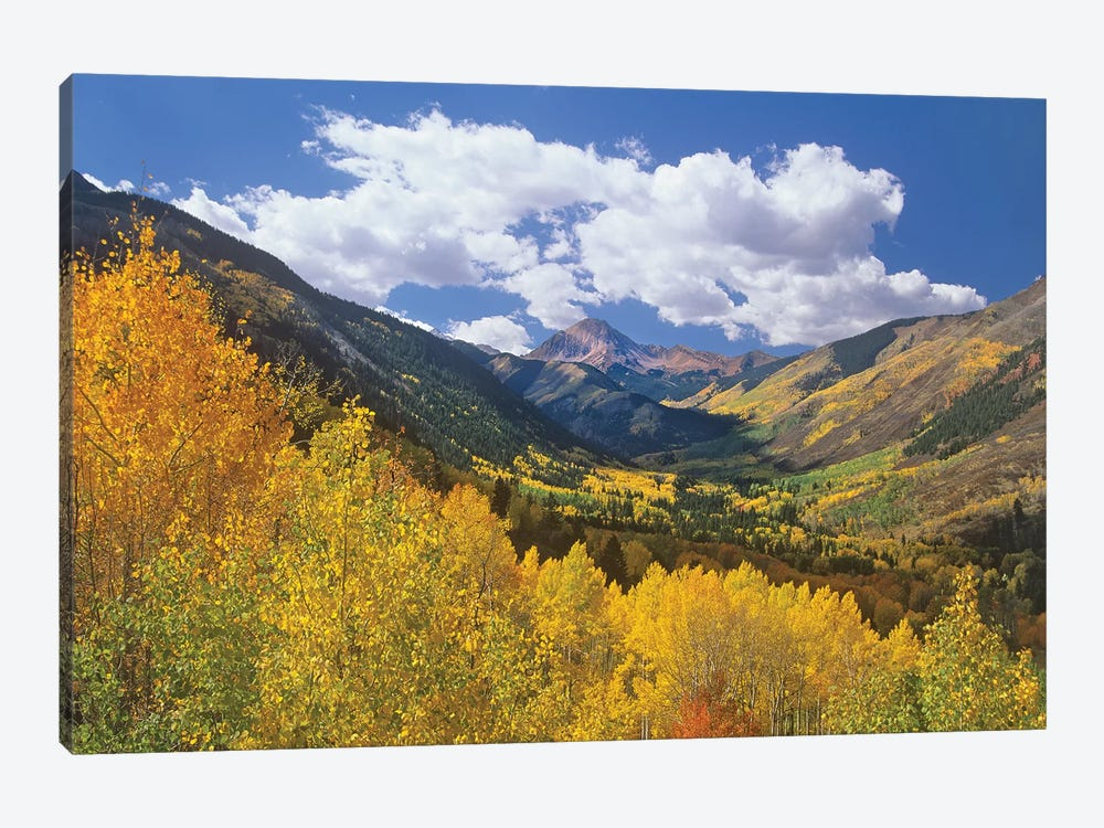 Haystack Mountain With Aspen Forest, Maroon Bells-Snowmass Wilderness, Colorado by Tim Fitzharris 1-piece Canvas Print