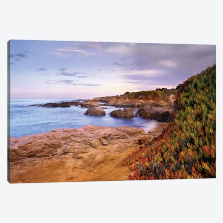 Ice Plant Growing On Cliffs At Bean Hollow Beach, California Canvas Print #TFI473} by Tim Fitzharris Canvas Print