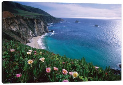 Ice Plant, Big Sur Coast Near Bixby Creek, California Canvas Art Print