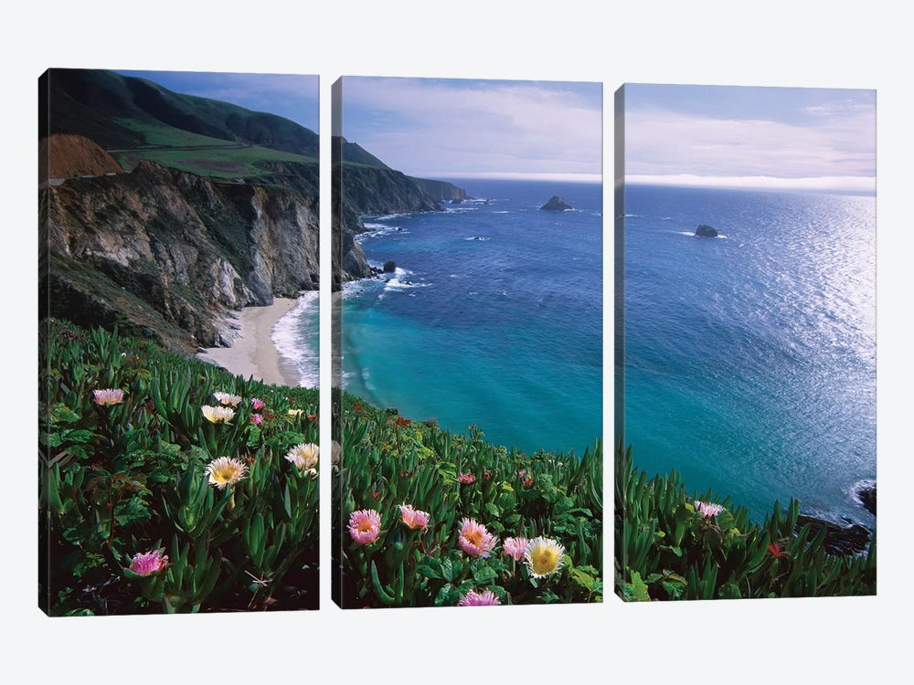 Ice Plant, Big Sur Coast Near Bixby Creek, California by Tim Fitzharris 3-piece Canvas Print