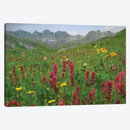Indian Paintbrush Meadow At American Basin, Colorado Canvas Print #TFI481} by Tim Fitzharris Canvas Art