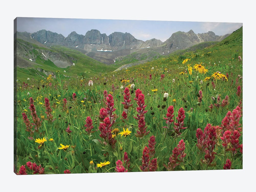 Indian Paintbrush Meadow At American Basin, Colorado by Tim Fitzharris 1-piece Canvas Wall Art