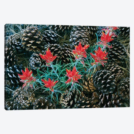 Indian Paintbrush Surrounded By Pine Cones, South Rim, Grand Canyon National Park, Arizona Canvas Print #TFI482} by Tim Fitzharris Canvas Artwork