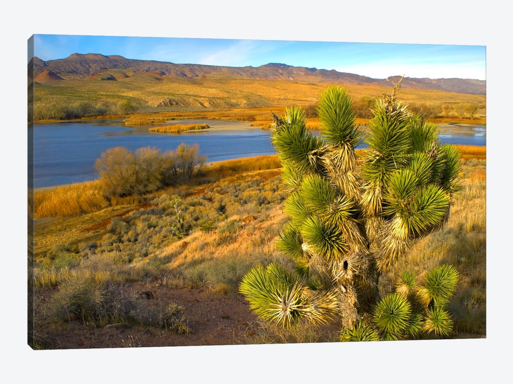 Joshua Tree And Wetlands Along The Pacific Flyway, Pahranagat National Wildlife Refuge, Nevada by Tim Fitzharris 1-piece Canvas Art