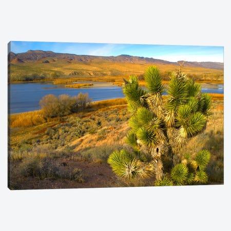 Joshua Tree And Wetlands Along The Pacific Flyway, Pahranagat National Wildlife Refuge, Nevada Canvas Print #TFI487} by Tim Fitzharris Canvas Art Print