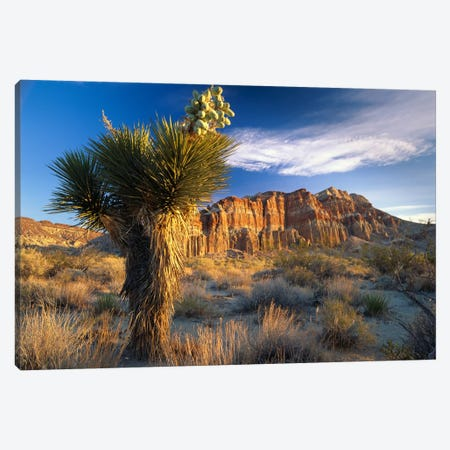 Joshua Tree At Red Rock State Park, California Canvas Print #TFI488} by Tim Fitzharris Canvas Artwork