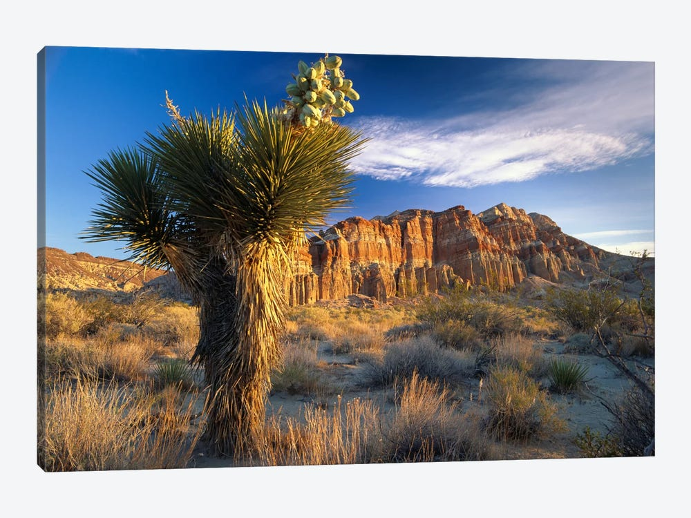 Joshua Tree At Red Rock State Park, California by Tim Fitzharris 1-piece Art Print