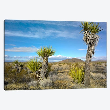 Joshua Tree, Cinder Cones, And Other Desert Vegetation, Mojave National Preserve, California Canvas Print #TFI492} by Tim Fitzharris Art Print
