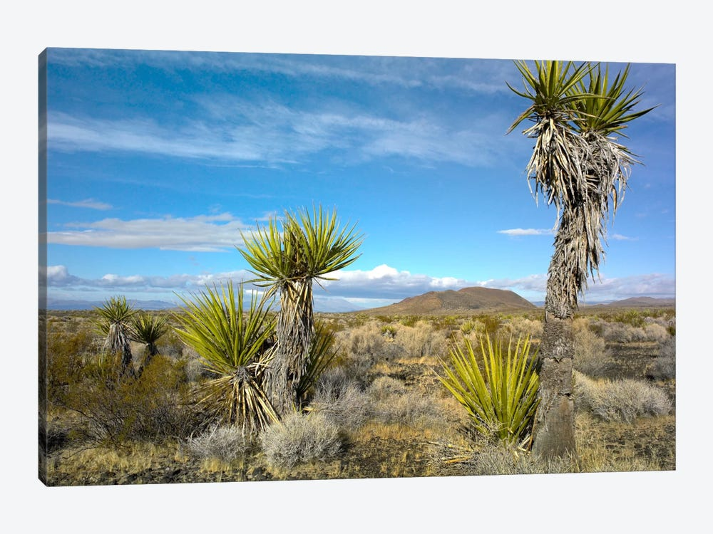 Joshua Tree, Cinder Cones, And Other Desert Vegetation, Mojave National Preserve, California by Tim Fitzharris 1-piece Canvas Wall Art