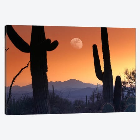 Kitt Peak Under Moon From Saguaro National Monument, Arizona. Canvas Print #TFI497} by Tim Fitzharris Canvas Art