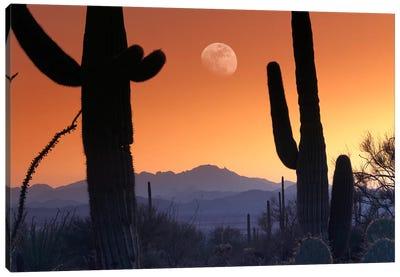 Kitt Peak Under Moon From Saguaro National Monument, Arizona. Canvas Art Print