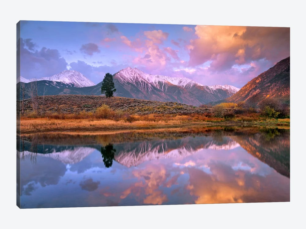 La Plata And Twin Peaks In The Sawatch Range Reflected In Twin Lakes With A Lone Tree, Colorado by Tim Fitzharris 1-piece Canvas Artwork