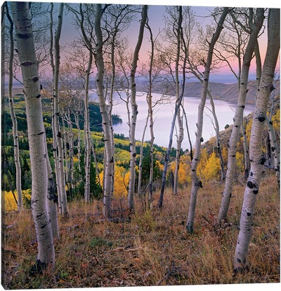 Aspen Forest Overlooking Fremont Lake, Bridger-Teton National Forest, Wyoming I Canvas Art Print