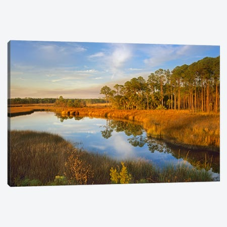 Lake Near Apalachicola, Florida Canvas Print #TFI502} by Tim Fitzharris Canvas Print