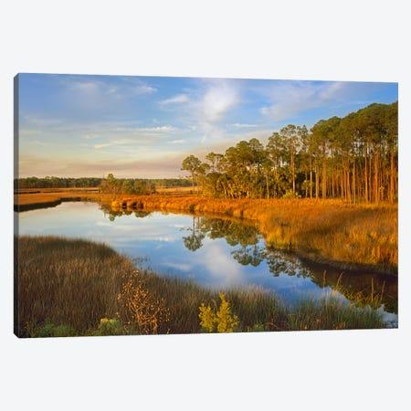 Lake Near Apalachicola, Florida Canvas Print #TFI502} by Tim Fitzharris Canvas Print