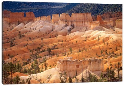 Landscape Of Eroded Formations Called Hoodoos And Fins, Bryce Canyon National Park, Utah Canvas Art Print