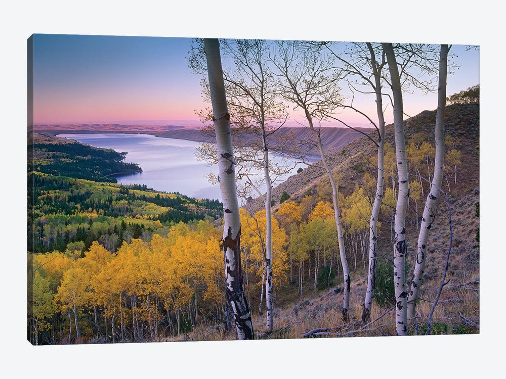 Aspen Forest Overlooking Fremont Lake, Bridger-Teton National Forest, Wyoming II by Tim Fitzharris 1-piece Art Print