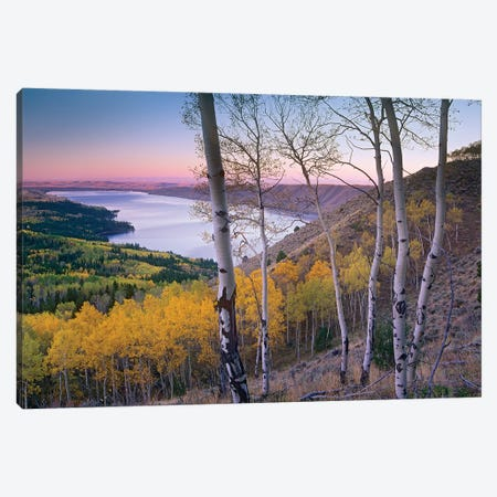Aspen Forest Overlooking Fremont Lake, Bridger-Teton National Forest, Wyoming II Canvas Print #TFI50} by Tim Fitzharris Canvas Print