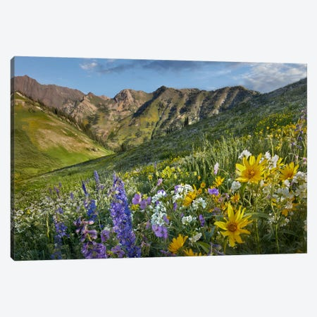 Larkspur And Sunflowers, Albion Basin, Wasatch Range, Utah Canvas Print #TFI512} by Tim Fitzharris Canvas Wall Art