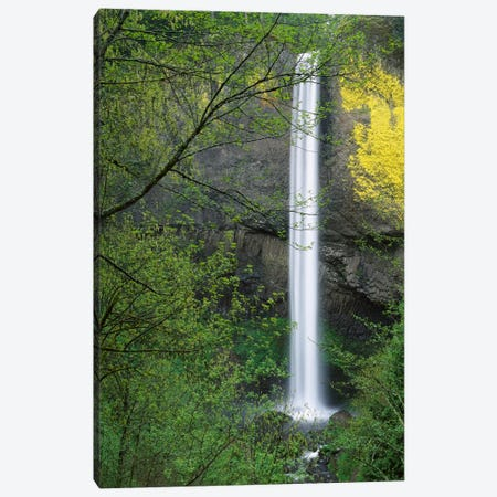 Latourell Falls, Columbia River Gorge Near Portland, Oregon I Canvas Print #TFI513} by Tim Fitzharris Canvas Artwork