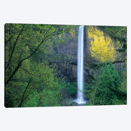 Latourell Falls, Columbia River Gorge Near Portland, Oregon II Canvas Print #TFI514} by Tim Fitzharris Canvas Print